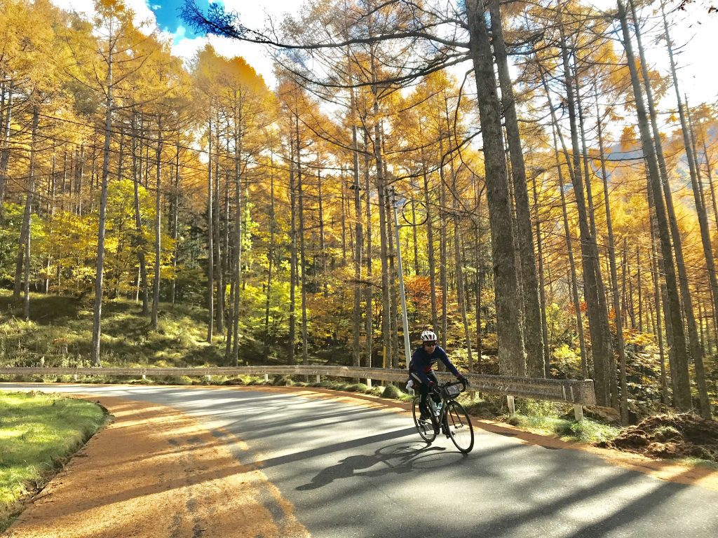 Flying through the amber pines of late fall in Japan.