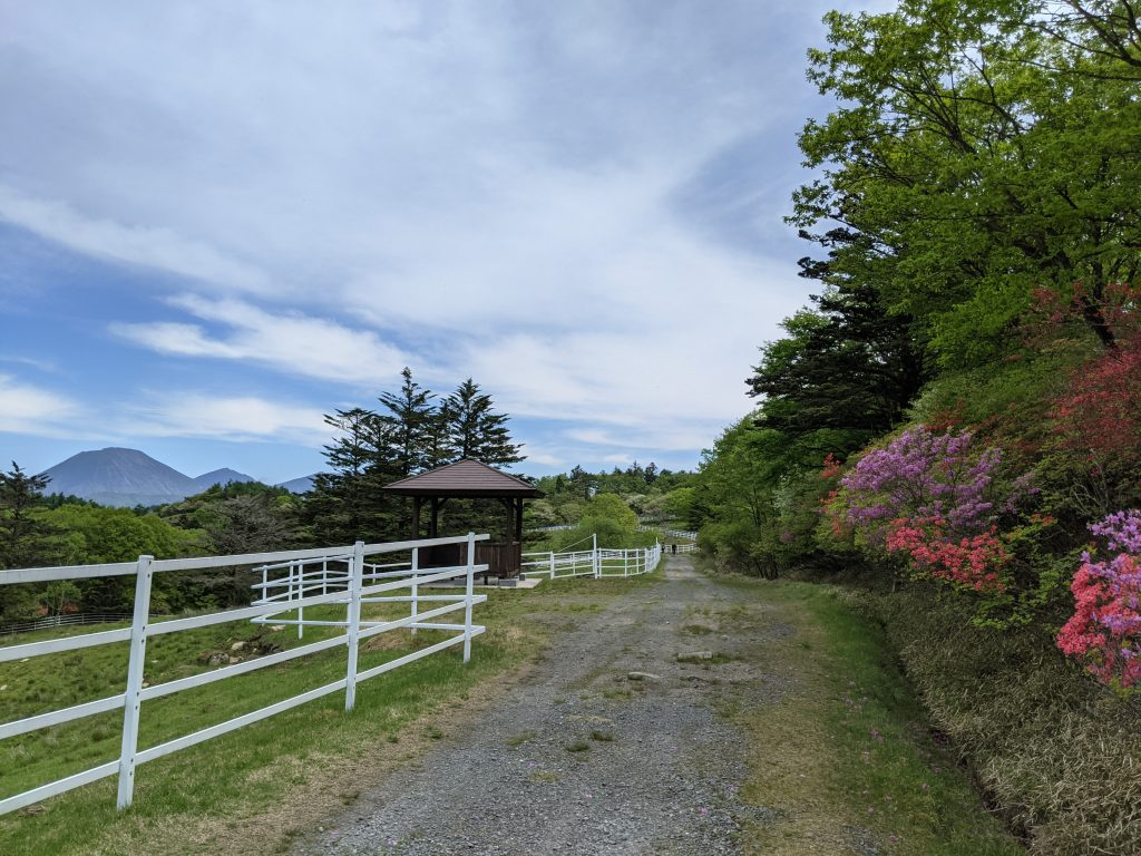 Mt Nantai in Nikko National Park in the distance and Azaleas road side. Taken from the gravel road along the ridge line.