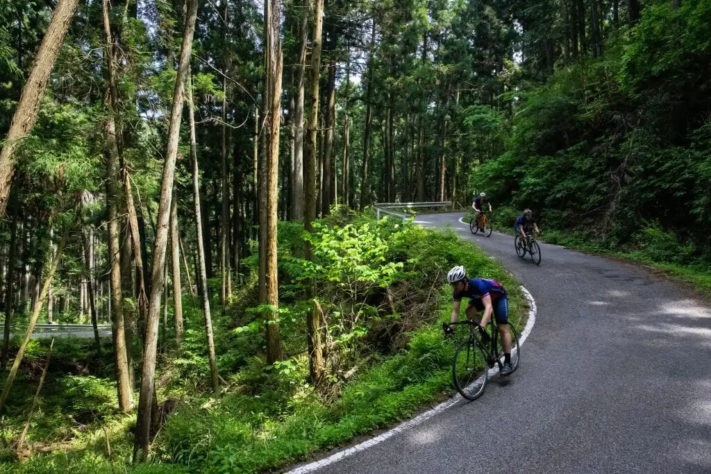 Deep Forest 1 1024x683 Jpg