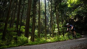 Ripping through the towering pines of a tranquil rindo forest road.