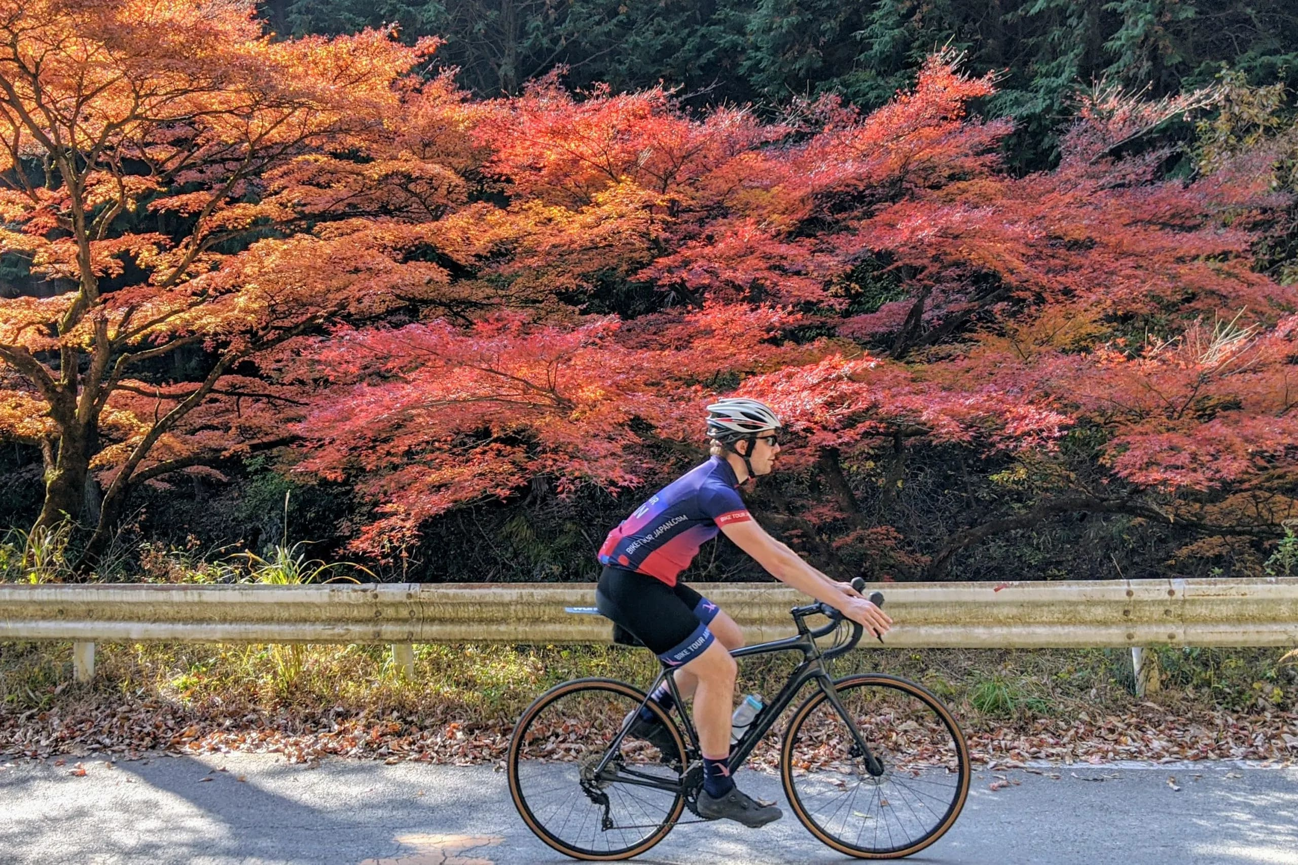 I could spend all day riding in the canopies of Japanese Maples & Ginko Trees of the Japanese countryside!